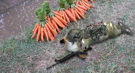bunny in camouflage sneaking through carrot patch