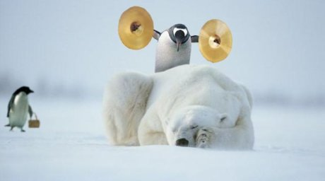 Penguin who's about to crash two cymbals together standing behind sleeping polar bear