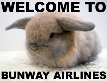 bunny, ears at 180 degrees, caption 'Welcome to Bunway Airlines'