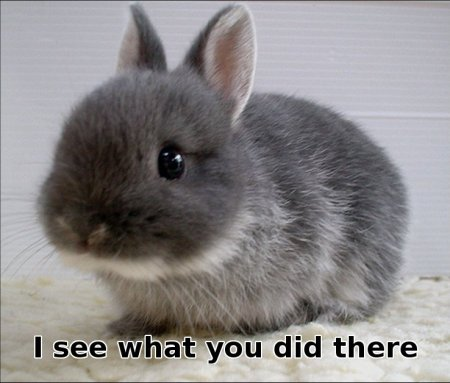 bunny saying 'I see what you did there'