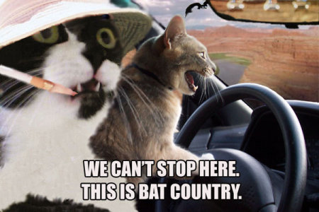 Cat: we can't stop here! This is bat country!