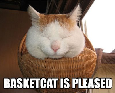 Basket cat is pleased