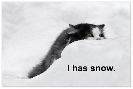 cat in snow, caption 'I has snow'