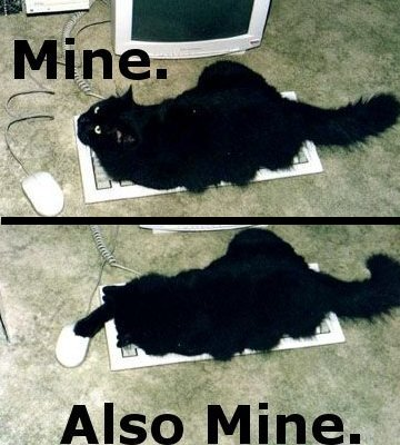 cat with keyboard and mouse, saying 'mine' and 'also mine'