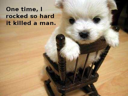 puppy on rocking chair, caption 'one time I rocked so hard it killed a man'