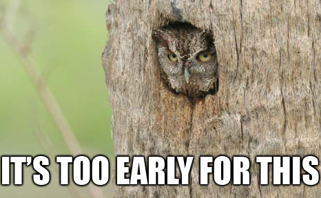 owl saying 'it's too early for this'