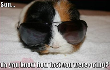 Guinea pig with sunglasses, caption 'Son, do you know how fast you were going?'
