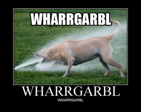 dog drinking out of sprinkler, caption 'wharrgarbl'