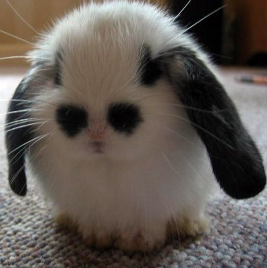 black and white bunny with spots that look like eyes