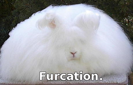 seriously fluffy bunny, caption 'furcation'