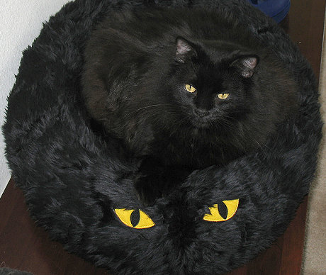 cat sitting in cat-like cat bed