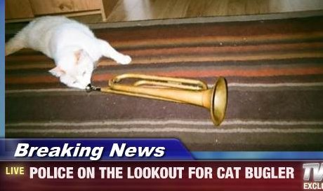 police on the lookout for cat bugler