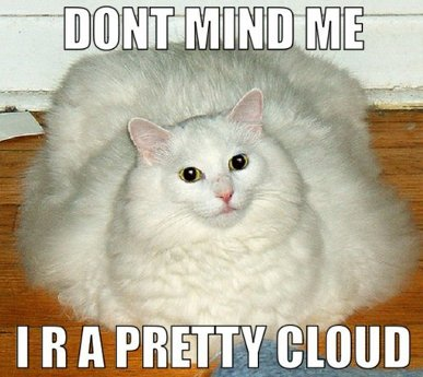 Cat saying 'Don't mind me, I are a pretty cloud'