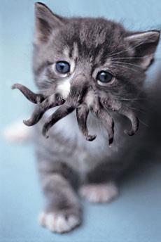 kitten Photoshopped to look like a cross between a cat and Cthulhu