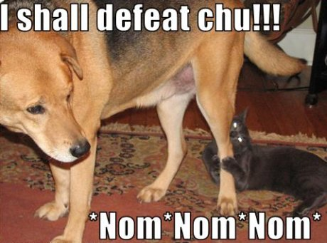 cat chewing on dog, caption 'I shall defeat chu!  Nom nom nom'