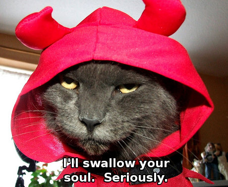 Cat wearing devil costume