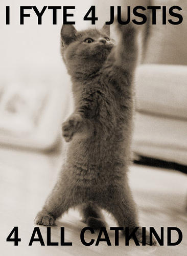 kitten captioned 'I fight for justice for all catkind!'