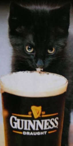 cat with pint of Guinness
