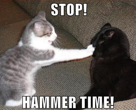 cat, caption 'stop! hammertime'