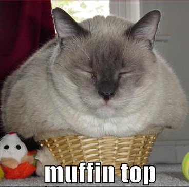 fat cat in basket, caption 'Muffin Top'