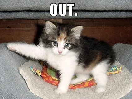 lolcat saying 'OUT'