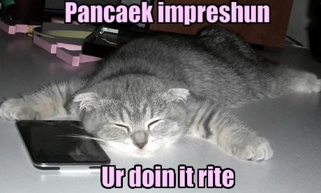 cat doing pancake impression