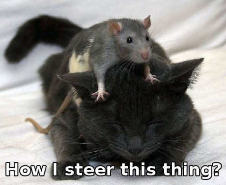 rat on top of cat, caption 'how I steer this thing?'