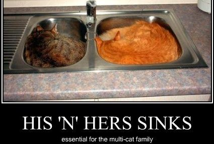 His and hers sinks: essential for the multi-cat family