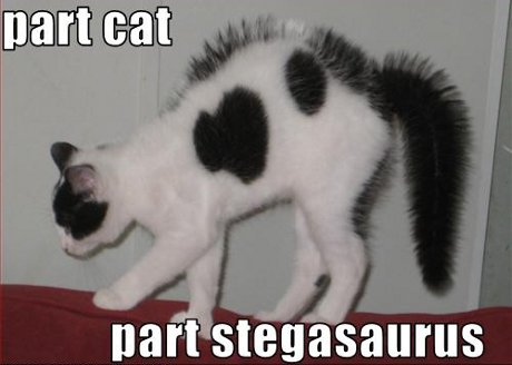 part cat, part stegosaurus