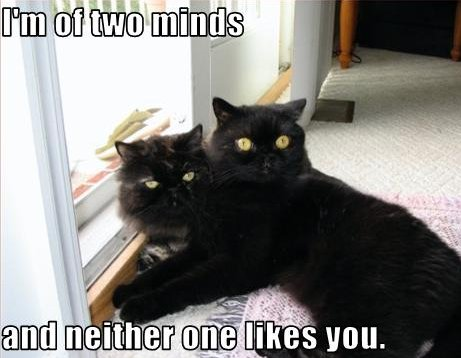 two-headed cat, I'm of two minds and neither one likes you