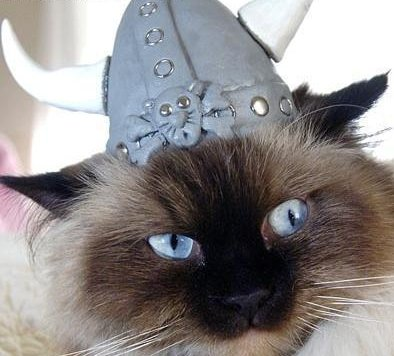 cat wearing Viking helmet