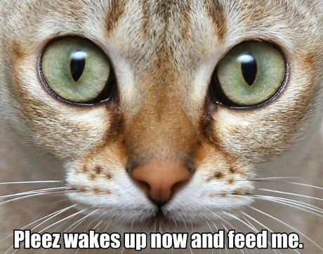 cat saying 'please wakes up now and feed me'