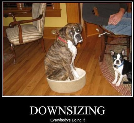 fake motivational poster, dog sitting in tiny bed, caption 'Downsizing: everybody's doing it'