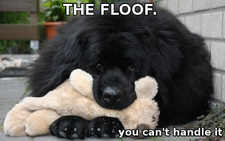 newfie dog captioned 'the floof. you can't handle it.'