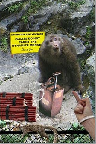 monkey holding detonator, 'Do not taunt the dynamite monkeys'