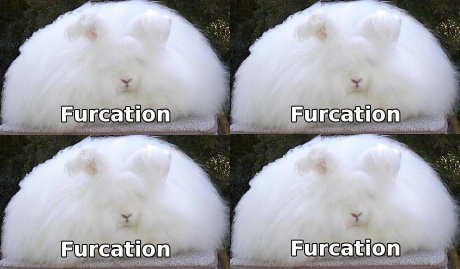 More furcation that you can handle
