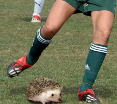 playing soccer with a hedgehog as the ball