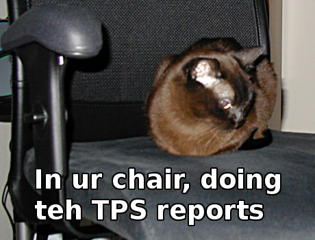 Fuzzball in chair, caption 'in ur chair doing teh TPS reports'