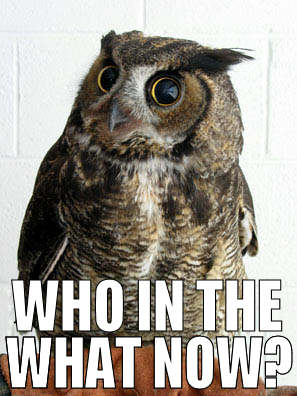 Owl saying 'Who in the what now?'