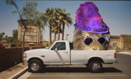 pickup truck with a guinea pig wearing a pimp outfit in the bed