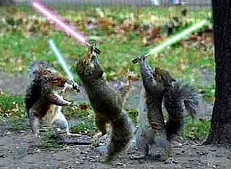 squirrels with lightsabers