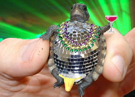 turtle crossed with disco ball