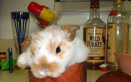 bunny looking dazed, sitting behind a bottle of Wild Turkey 101