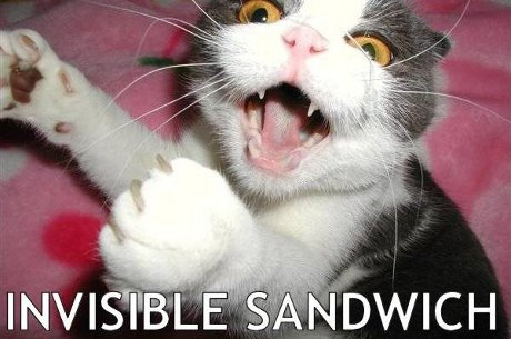 cat with invisible sandwich