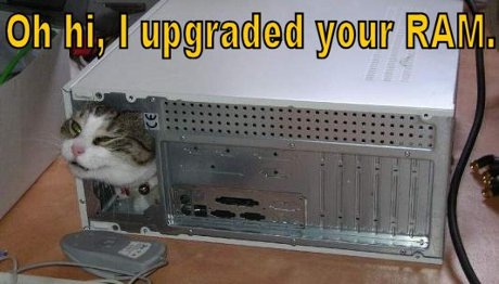 cat saying 'Oh hai, I upgraded your RAM'