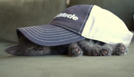 kitten sleeping under baseball cap