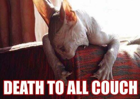 hairless cat attacking a couch, caption 'Death to all couch'