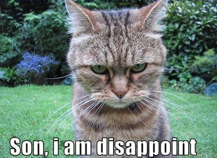cat saying 'Son, I am disappoint'