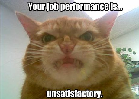cat grimacing and saying 'Your job performance is unsatisfactory'