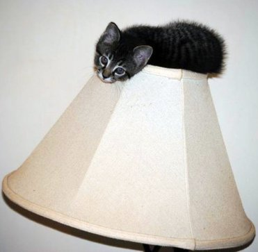kitten sitting on top of a lampshade